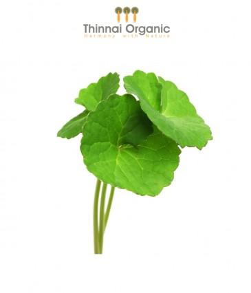 Organic Gotukola(Vallarai)