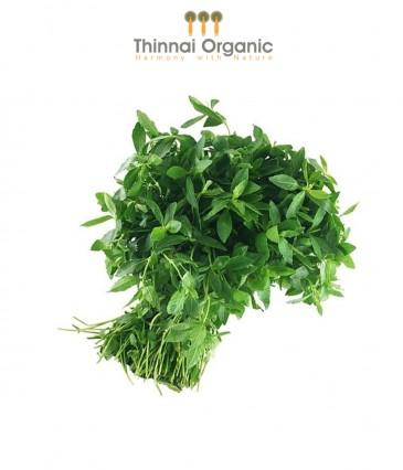 Thinnai Organic
